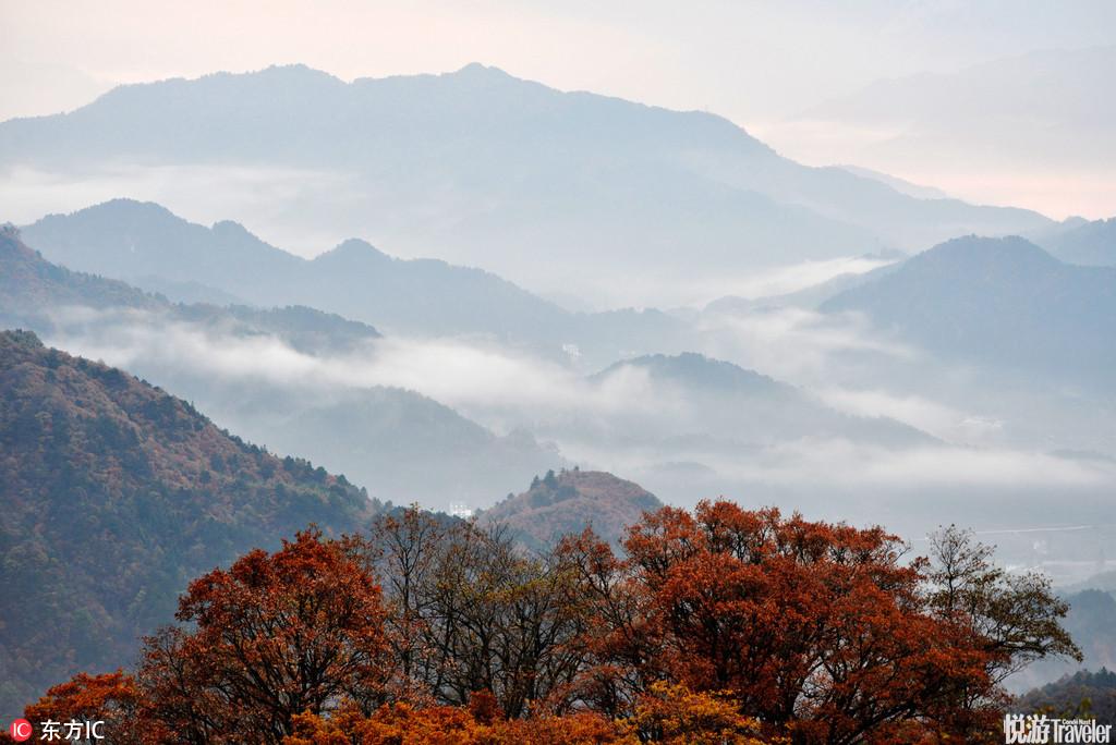大别山区安徽省金寨县马鬃岭保护区层林尽染,云雾缭绕,美如仙境。
