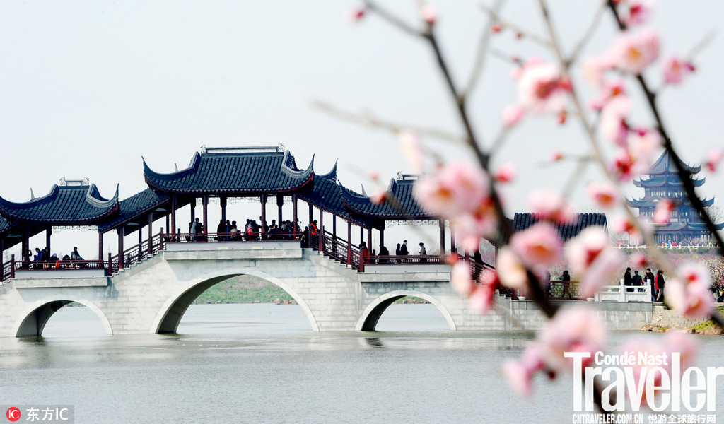 上海海湾森林公园,盛开的二万五千多株梅花将梅园汇成了梅花的海洋。