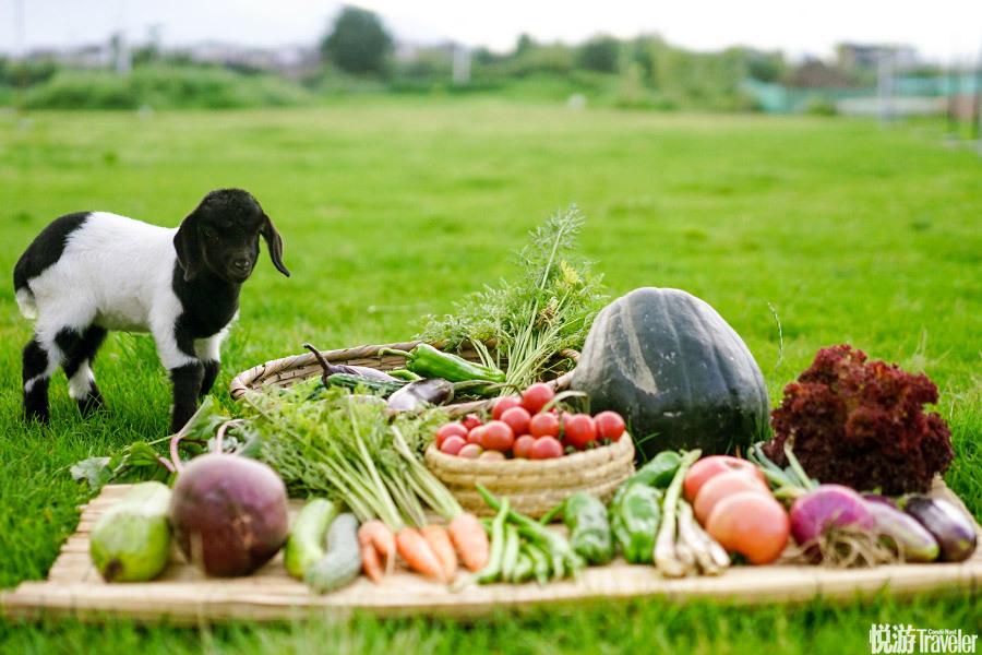 每周六,在柴米多农场餐厅小院举办的农夫市集不可错过。(大理古城叶榆路204号) 彩虹农场可免费参观,但...