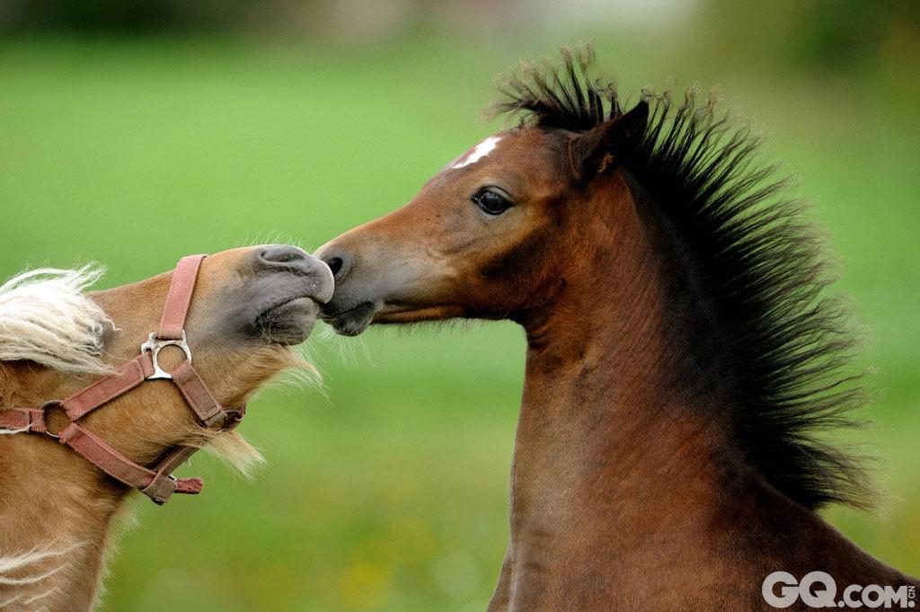 跟小动物学亲亲秀恩爱