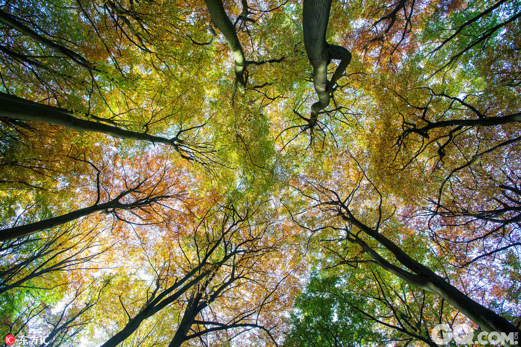 世界最美的秋景