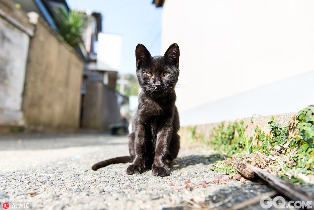 摄影师andrew marttila今年11月份来到日本福冈县的蓝岛,这里住着无数