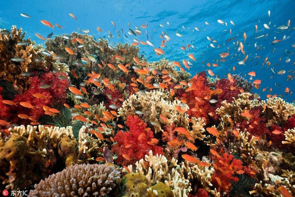 无数奇形怪状、色彩斑斓的海鱼在斐济的水里畅游,将大海搅得五彩缤纷,和爱人住在梦幻的水上屋,坐在甲板上看自在游走的七彩鱼儿,快意人生,如此逍遥。