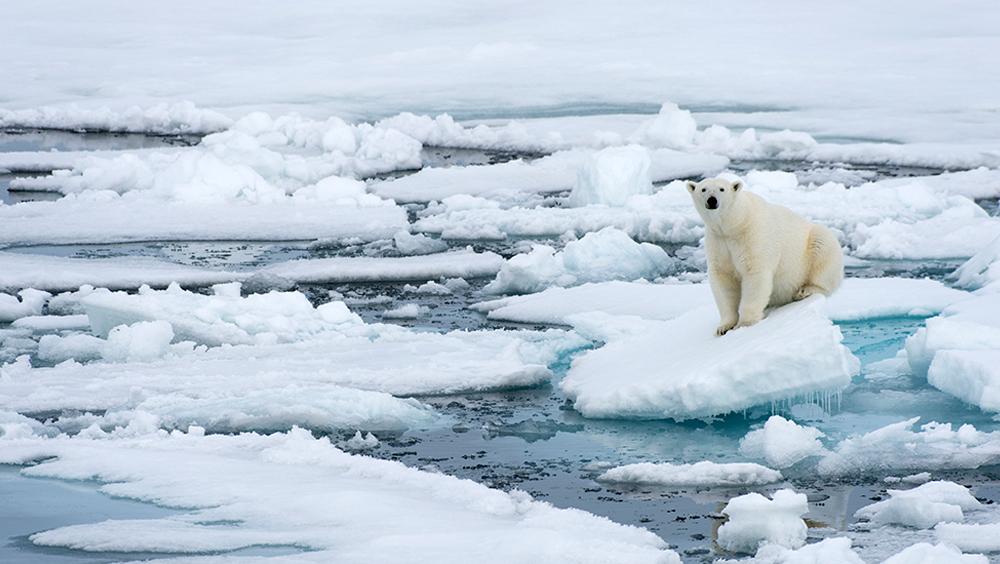 北極氣溫達到38℃ 這里是你需要知道的