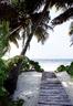 棕榈树林中还有一条静谧的小路,引人从房屋一直走向海滩。
