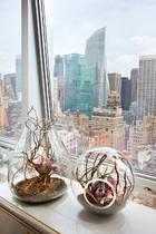 窗台上的多肉植物出自Honua Terrariums by Artist Jeremy Silva(www.honuany.com),与纽约坚硬的天际线形成了对比。