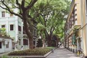 12:00 诗意生活。沙面的各国领事馆建筑群已经成为初到广州必去的景点之一,这座昔日安静悠闲的小岛,用...