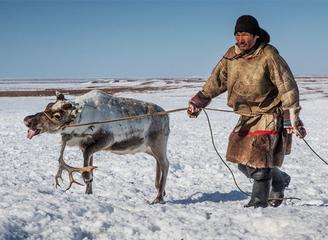 俄罗斯驯鹿牧民的一天