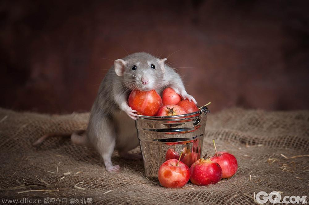 qq头像 男生小老鼠