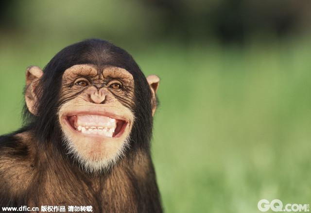 这是一组动物咧嘴微笑的照片
