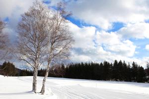 北海道的魅力粉雪