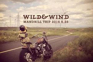 Mandrill trip 2016 - Wild & Wind