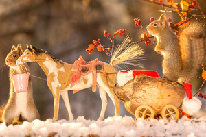 瑞典红松鼠开派对迎圣诞 弹钢琴玩吉他变小小音乐家