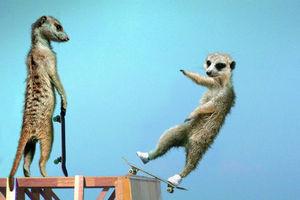 世界滑板日 看动物滑板高手秀你一脸