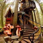 13座趣味树屋 带你走进童年梦境