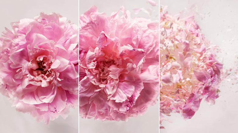 dior模特与鲜花大片