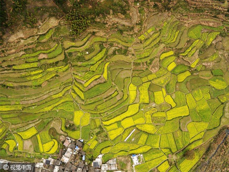 中国16个最美油菜花景区 金黄的田野召唤你