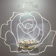 Dior迪奧花秘瑰萃系列與格蘭維爾玫瑰