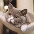 為什么身邊養貓的人越來越多了