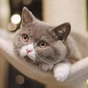 为什么身边养猫的人越来越多了