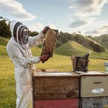 """康维他麦卢卡蜂蜜,""""奇葩星球""""上也力推的年货?#32654;?生活资讯"""
