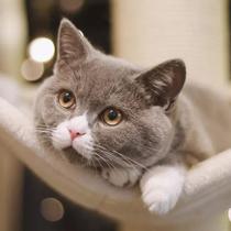 為什么身邊養貓的人越來越多了-家居