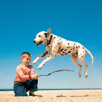 """TASCHEN带来""""人类最好的朋友""""新书《沃尔特·尚多哈:狗狗摄影集》-艺术"""